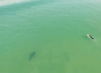 surf, Prismo Beach, requins, drone